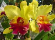 Cuidados Orquídeas