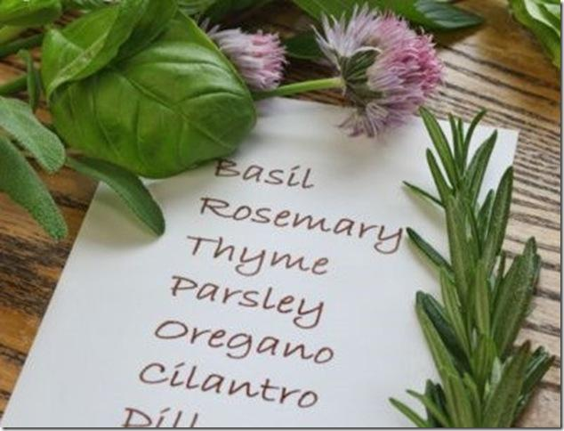 Un mini jard n de hierbas arom ticas paperblog - Plantas aromaticas jardin ...