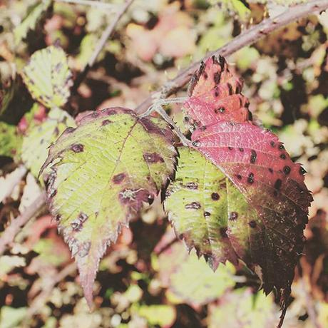 Trucos para capturar el otoño con tu cámara