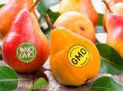 Como distinguir fruta verdura compras transgénica orgánica