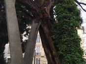 árbol viejo París