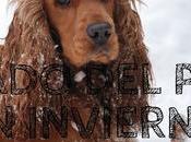 Consejos para cuidar perro invierno