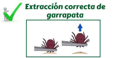 extracciongarrapata_american_pest_control_madrid