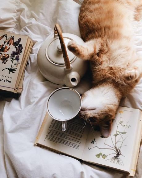 El placer de tomar té verde: beneficios y un momento para ti