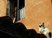 gato está tomando tejado