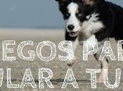 Juegos para estimular perro
