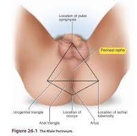 La Distancia Ano Genital se relaciona con el Cáncer de Próstata