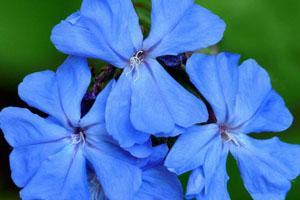 Los beneficios de las Flores de Bach 2