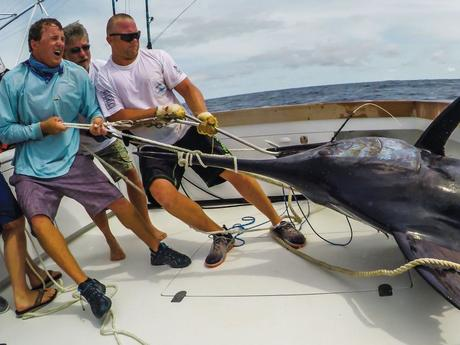 Dreamin On Team Boats Thousand Pound Blue Marlin In Cape Verde