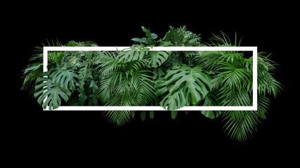 Tropical Leaves Foliage Jungle Plant Bush Nature Backdrop With White Frame On Black Background