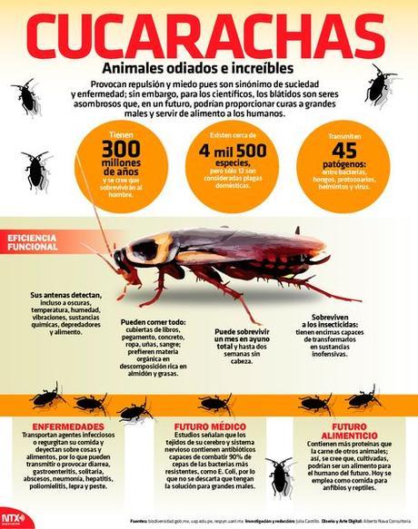 Cucarachas: animales odiados e increíbles