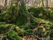 bosque esloveno