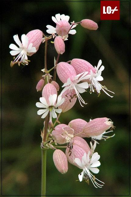 Mensajes De Flores Www Imagenesmi Com