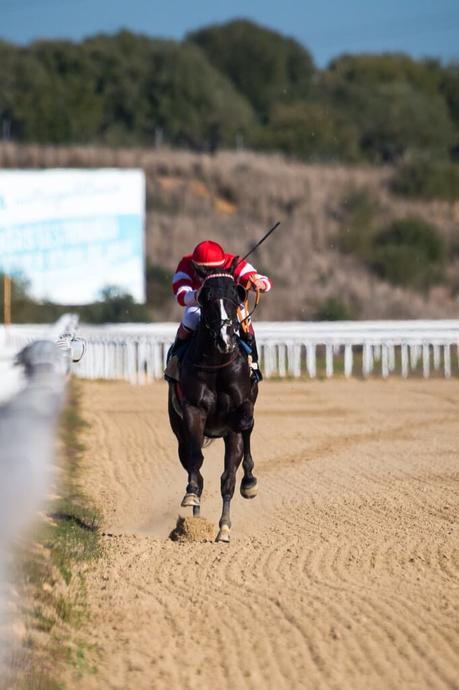 Domingo de Carreras en el Gran Hipódromo de Andalucía