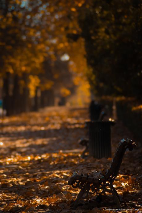 Colores de otoño que van tejiendo lentamente un manto amarillo sobre nuestras cabezas