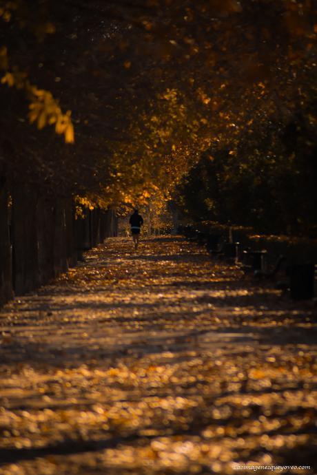 Arboles con sus hojas amarillas de otoño
