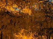 Colores otoño tejiendo lentamente manto amarillo sobre nuestras cabezas
