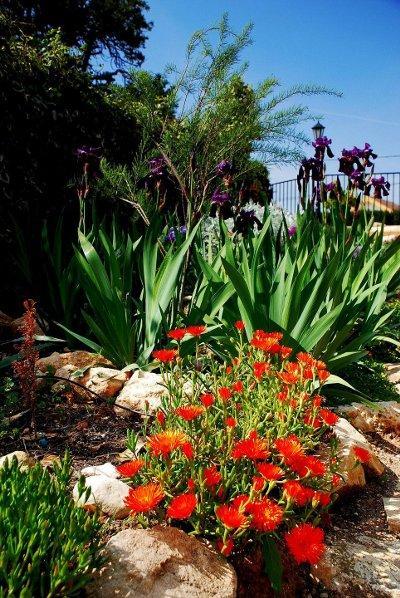 Un Jardín de Rocallas