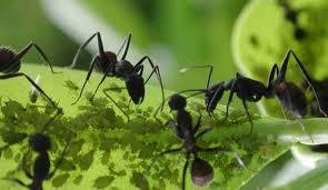 Eliminar las hormigas del jard n paperblog for Eliminar hormigas del jardin