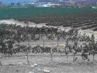 ONEGAR TEMPRANILLO 2007 ( Finca Onegar Purchena - Valle del Almanzora (Almería)