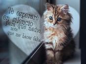 esperaré silencio para nadie note haces falta.