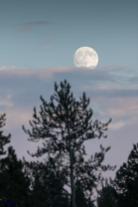 Luna llena en Yellowstone