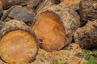 El aprovechamiento forestal: una posible solución a la España despoblada
