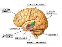 Identifican el factor clave que conduce a las convulsiones