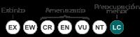 Aves de Argentina de presencia estable o accidental en peligro: la Remolinera Negra.