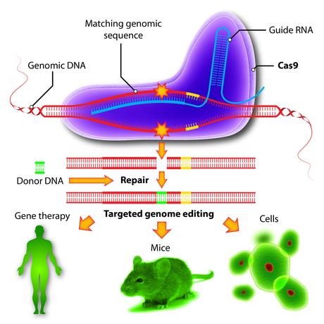 Ahora sí, CRISPR ya está en clínica humana