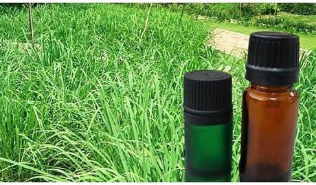 Aceite de Citronela, usos, beneficios y cómo se hace