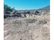 Inmobiliaria destruye zona arqueológica Villa Reyes
