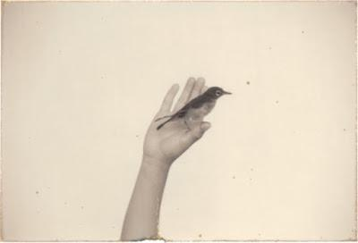 MASAO YAMAMOTO: EL FOTÓGRAFO DE LA BELLEZA MINIMAL