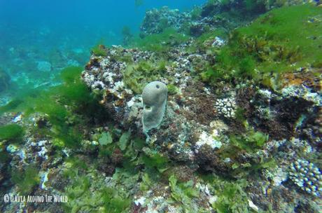 barrera de coral en anakao madagascar