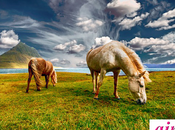 Soñar caballo ¿Qué significa soñar caballos?