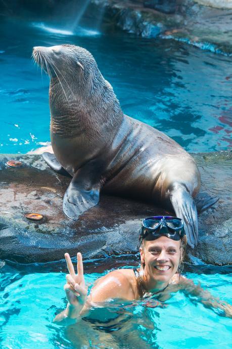 Sea-life-swim-with-seals ▷ Comentario sobre 3 ciudades de playa en la Costa del Sol en Queensland por Family Travel en Australia | Costa del Sol - Viajes