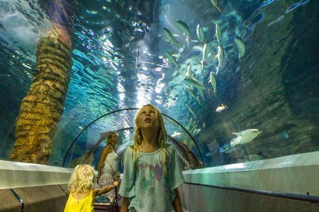 Sea-Life ▷ Comentario sobre 3 ciudades de playa en la Costa del Sol en Queensland por Family Travel en Australia | Costa del Sol - Viajes