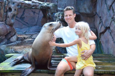 Seal-encounter ▷ Comentario sobre 3 ciudades de playa en la Costa del Sol en Queensland por Family Travel en Australia | Costa del Sol - Viajes