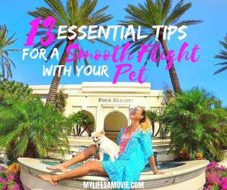 13-Essential-Tips-For-A-Smooth-Flight-With-Your-Pet ▷ 13 consejos esenciales para un buen vuelo con tu mascota