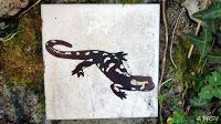 Azulejo de la ruta de la Salamandra