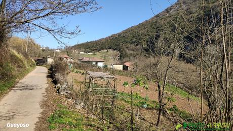 El Guayoso, Oviedo