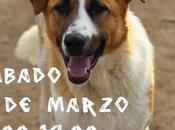 Jornada puertas abiertas Scooby (Medina Campo).