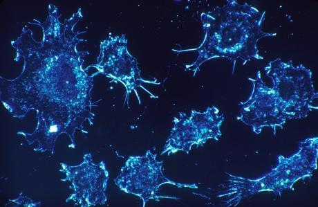 Las células usan azúcares para comunicarse a nivel molecular