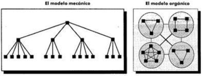 oganizacin_mec_nica_vs_organizaci_n_org_nica.jpg