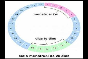 Dias Fertiles Mujer Calendario.Como Saber Cuando Son Dias Fertiles De La Mujer
