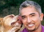 Cesar Millán, encantador perros, humillado Noria, Telecinco