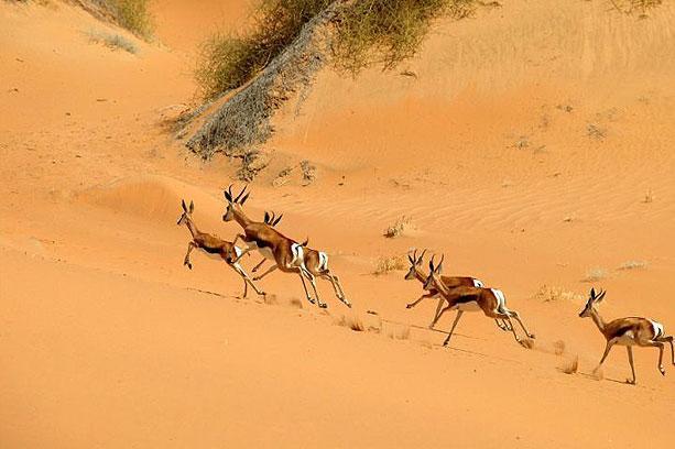 Wildlife já se habituou a vida no deserto