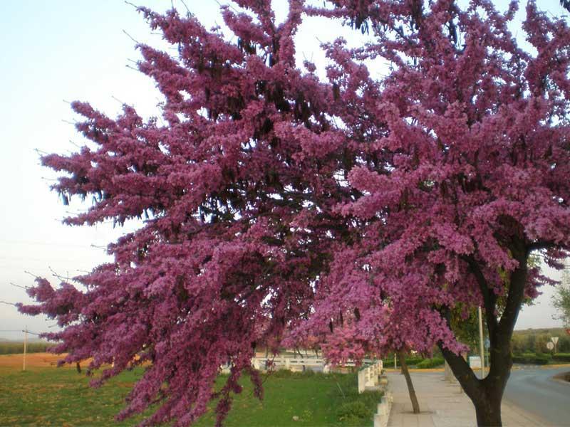 Abril, de aguas y flores mil Paperblog