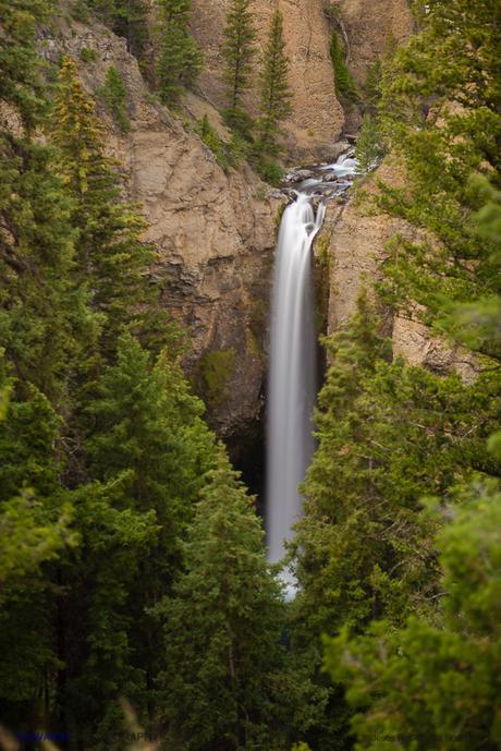 Tower Fall. Una alta y bella cascada semiescondida entre la vegetación