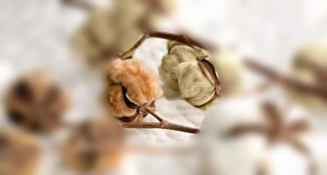 Problemas intimos de piel y el algodón orgánico